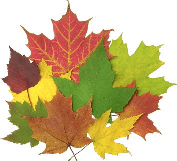 Leaf_Logo_Picture.jpg